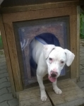 Termofüggöny kutyaházra