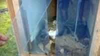 Kutyafüggöny cicáknak