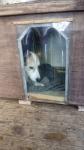 Hővédő kutyafüggöny
