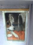 Szélfogó kutyaajtó