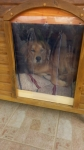 Kutyaház függöny