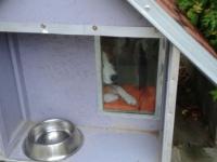Kutyaház ajtó