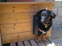 Léc nélküli kutyaajtó kutyaházra