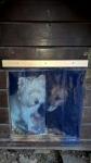 kutyaajtó függöny