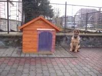 Törhetetlen kutyafüggöny