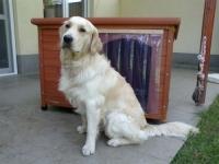 Átlátszó kutyaajtó függöny