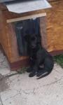 Törhetetlen PVC ajtó kutyaházra