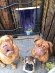 PVC függöny kutyáknak