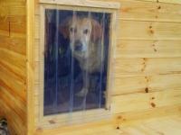 hőfüggöny kutyaházra