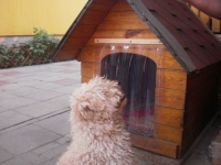 kutyaház szigetelése