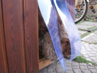 átlátszó műanyag függöny kutyaházra